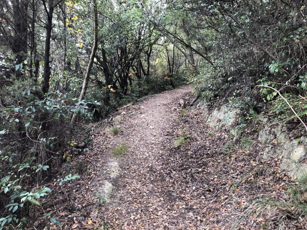 久司山遊歩道